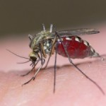 Mosquito: The most dangerous animal in the world