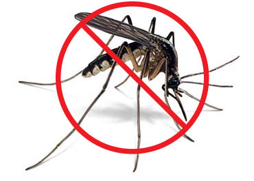 Mosquito: The most dangerous animals in the world