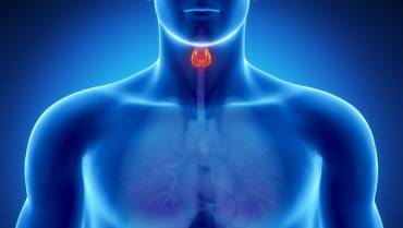 Learn More About Your Thyroid Gland!