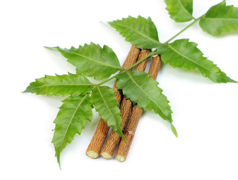 Benefits of Neem for quality skin care