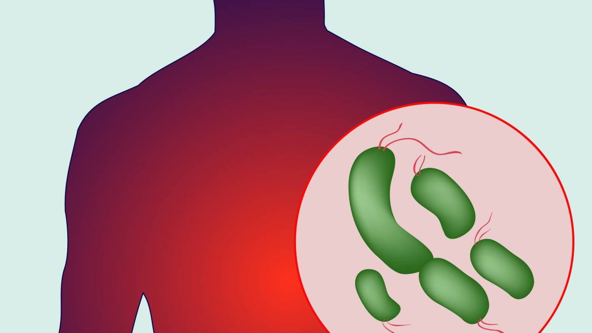 Foods that can increase your gut bacteria