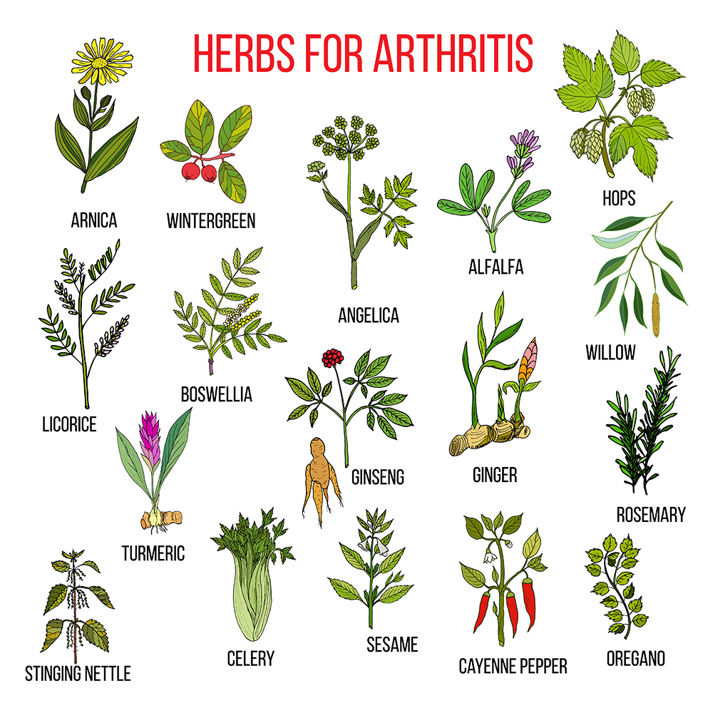 Herbs that Fight Arthritis Pain