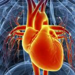Symptoms of Heart Disease in Men