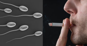 SMOKING CAUSE INFERTILITY IN MALES