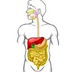 5 Tips to Improve Digestive System